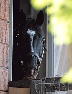 Sunday Silence & Easy Goer, llegada del Preakness Stakes